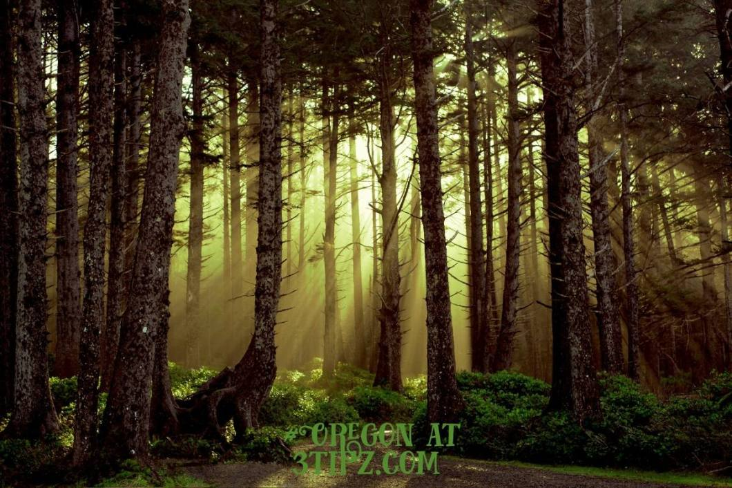 #Forests at 3tipz.com
