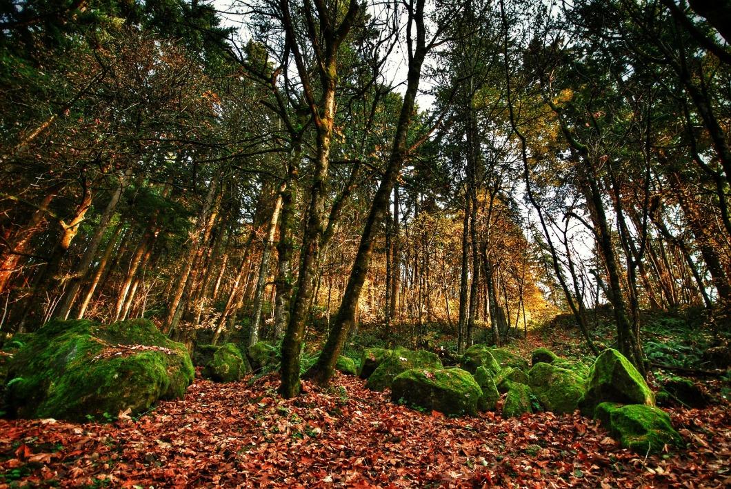 Portland Oregon the Forest Park